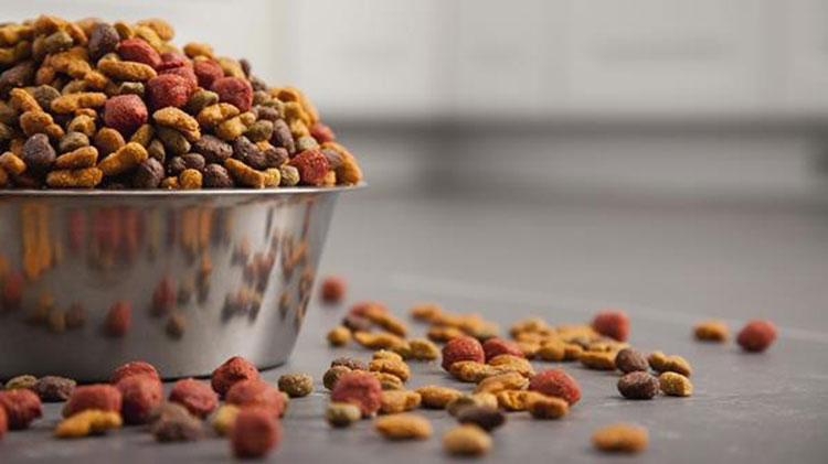 best dog food for ear infection