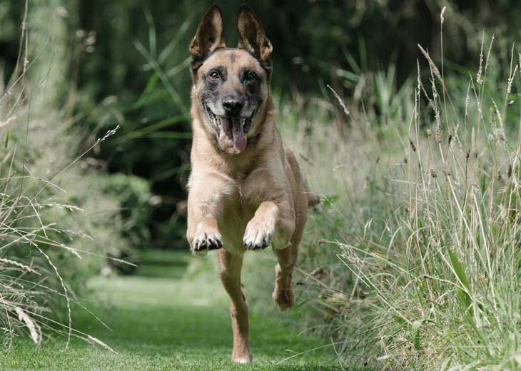 E-Collars for Training Your Dog