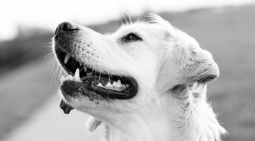 7 Practical Tips For Controlling Your Dog's Allergies