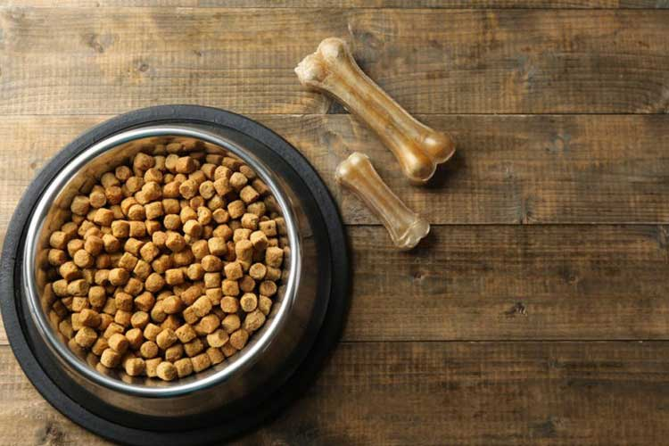 best dog food for ear infections