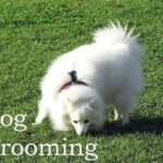 Dog Grooming Tips: How to Choose the Right Grooming Shears