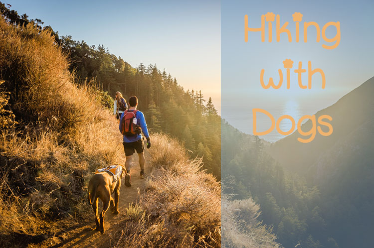 8 Must Know Tips For Hiking with Dogs