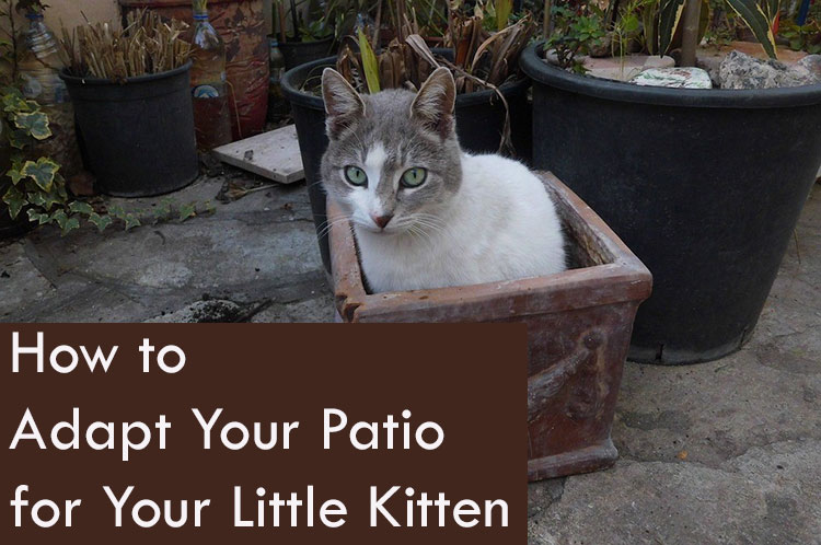 How to Adapt Your Patio for Your Little Kitten