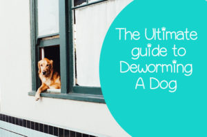 Best Ways To Deworm Your Dog Naturally At Home