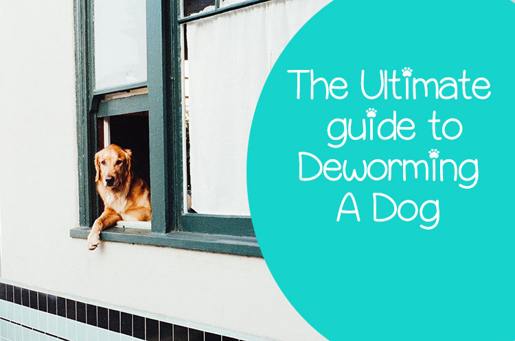 dog deworming