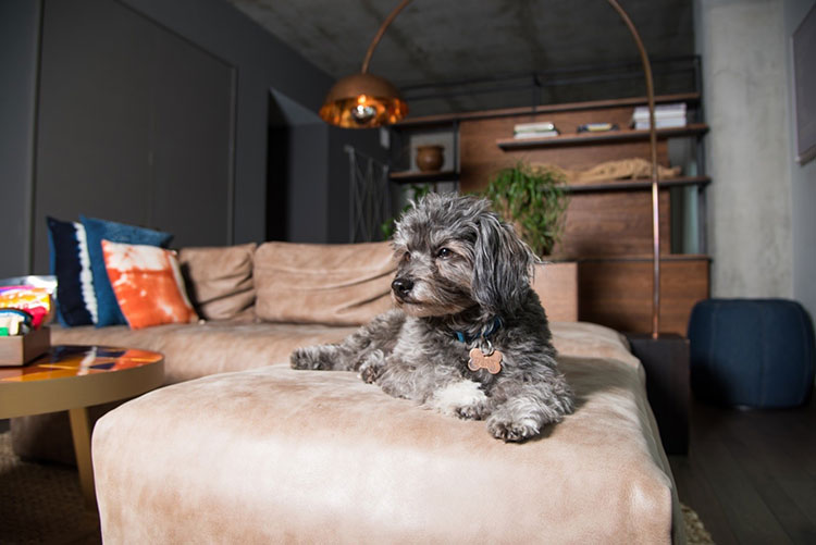amenities for your pet