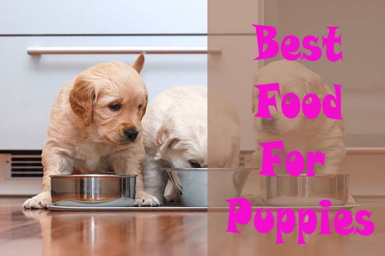 Best-Rated Dog Food For Puppies 2018