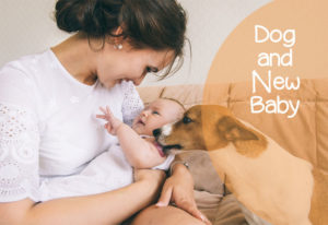Seven Ways to Make Your Newborn Baby Safe around Dogs