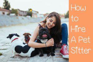 find a pet sitter