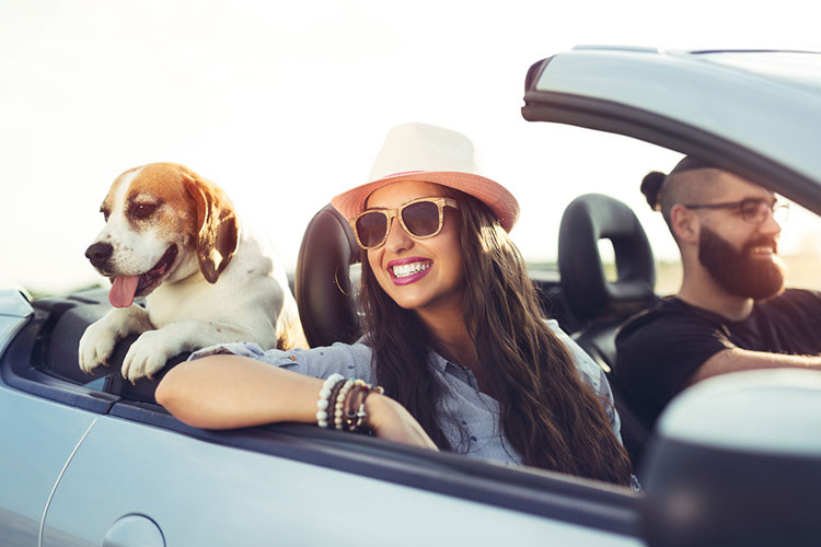 The Comprehensive Guide To Traveling Internationally With A Dog