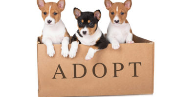 How Pet Adoption Benefits Those in Addiction Recovery