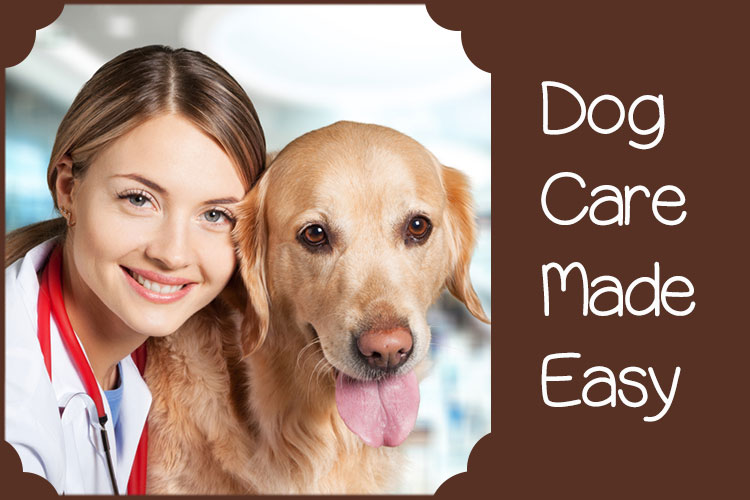 Dog Healthcare Made Easy For You in Simple Steps