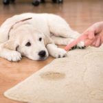 The Dos and Don'ts of Puppy House Training