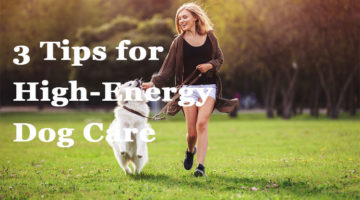 3 Tips for High-Energy Dog Care