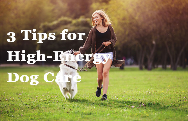 Tips for High-Energy Dog Care
