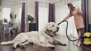 keep your home clean despite of having a dog