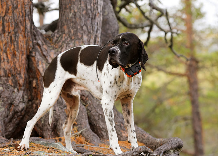 Introduce the Pet Tracker System to Safe Your Pets