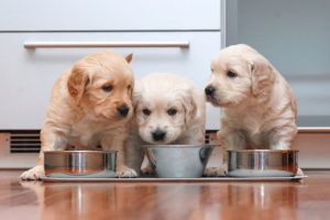 how to feed your newborn dog