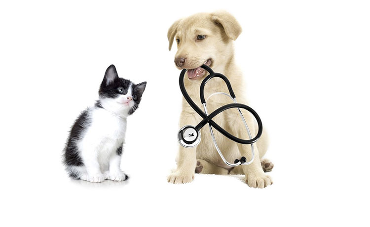 Learn About Pet Insurance in Details