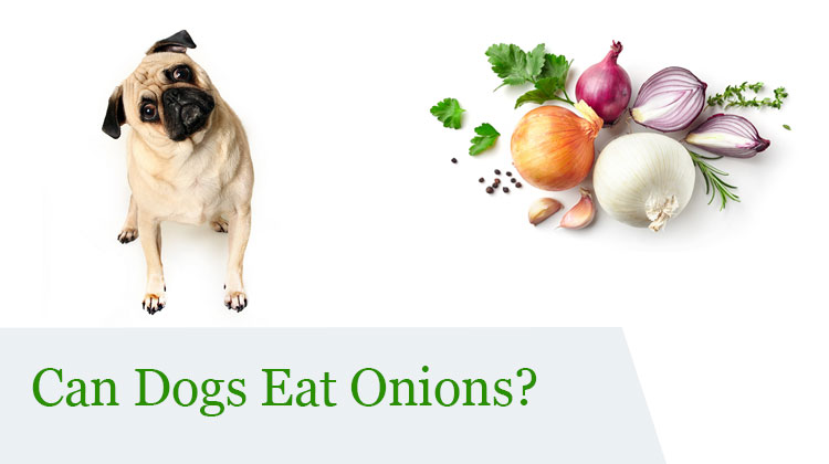 can dog eat onion?
