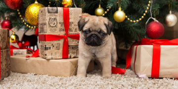 Christmas Home Safety Tips for Dog Owners