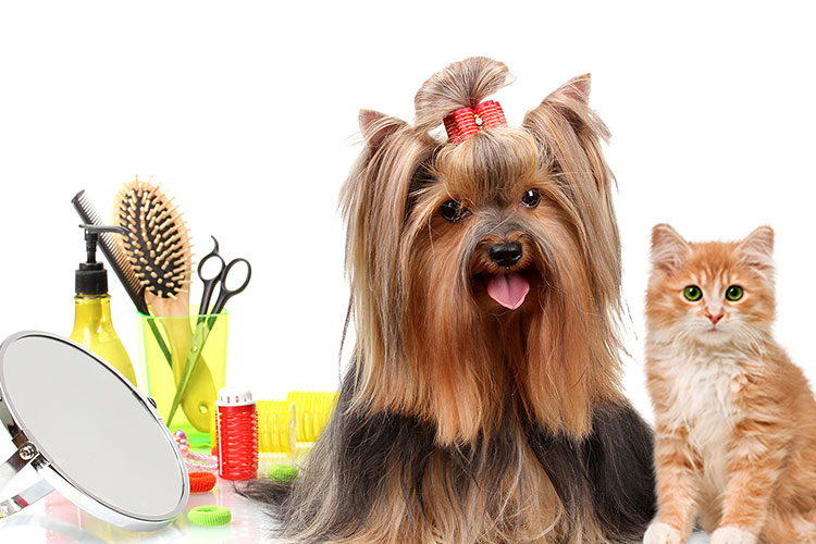 DIY pet grooming tips