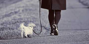 Leash Train Your Puppy