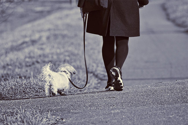 Leash Train Your Puppy