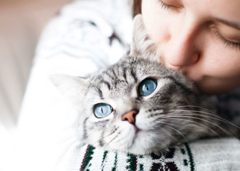 lovely cat