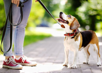 Dog Leashes To Buy