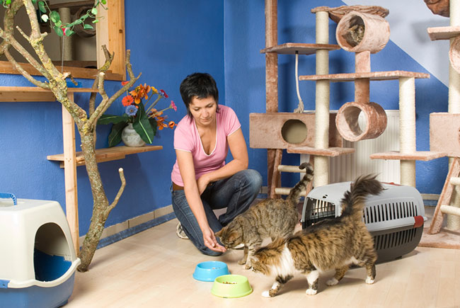 cat home care