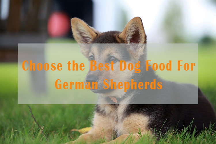 how to choose the best dog food for German Shepherd