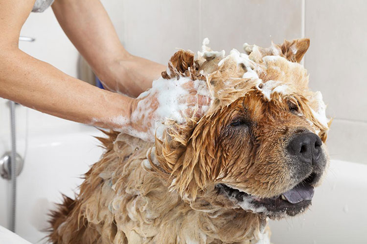 getting a dog shampoo from a pet grooming store