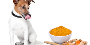 Benefits of Turmeric for Dogs