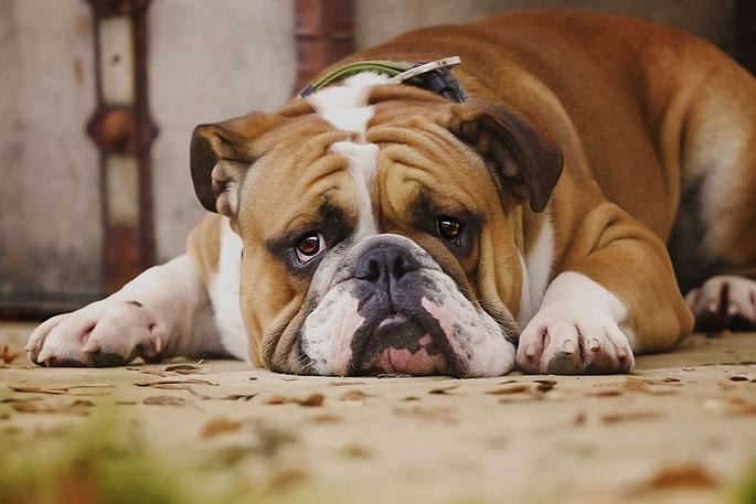 Dog's Mental Health