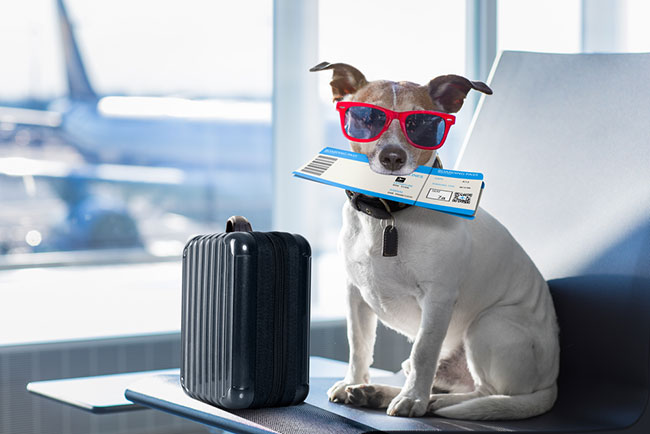 travel with dog to singapore