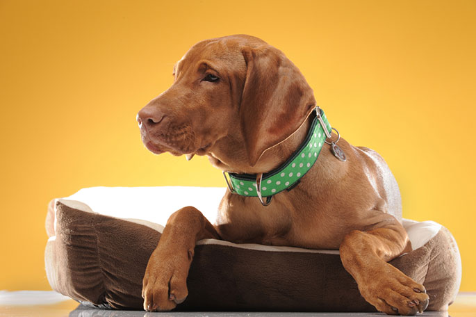How to Choose the Perfect Collar Size for Your Dog