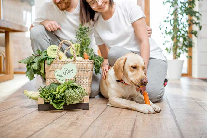 Will you be using homemade or commercial dog food?
