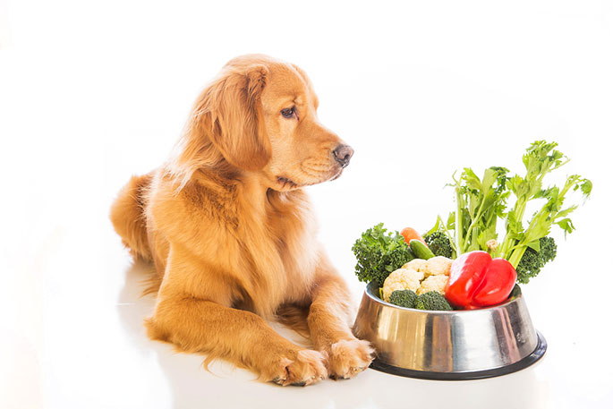 Can Dogs Be Vegan