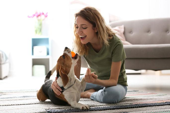 Ways to Entertain Your Dog