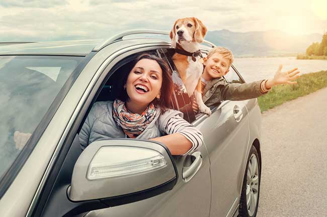 Tips for the Road Trip With Dog