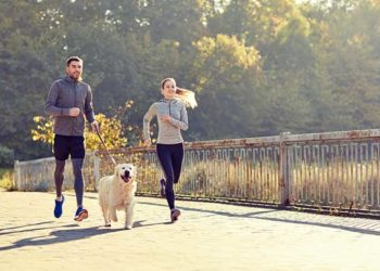 Tips to Keep Your Dog in Good Health