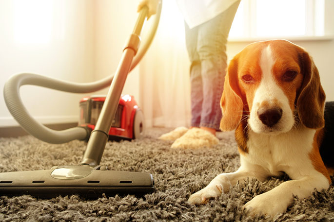 Types of Vacuum Cleaners for Pet Hair