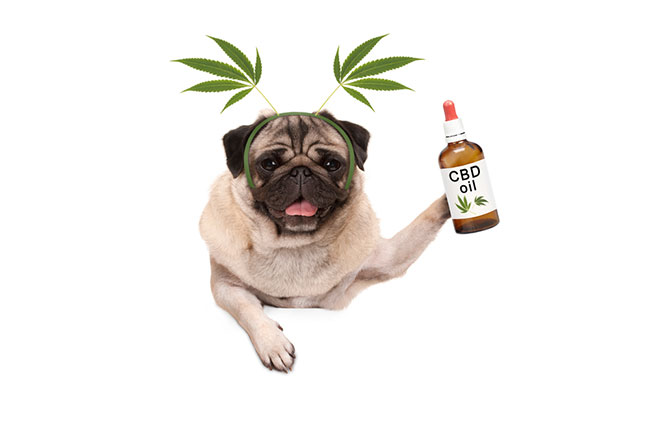 cbd oil for dog