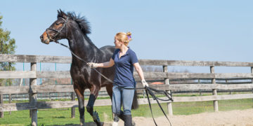 7 Effective Tips to Train Your Horse