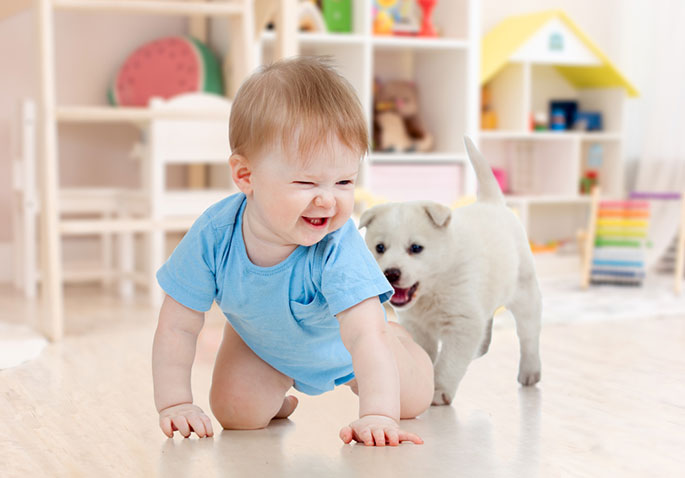 How to Choose the Ideal Pet Dog for Children