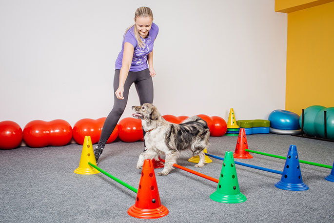 Keep Your Dog Active Indoors