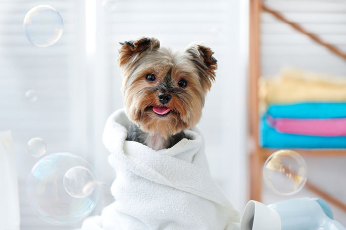 How to Bathe Your Dog from Head to Toes