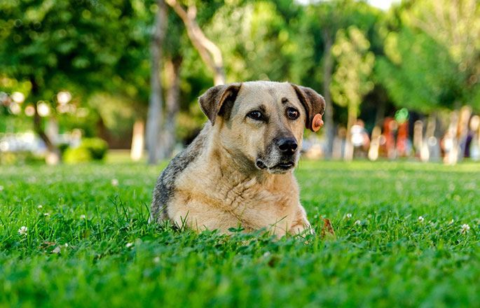The Best Grass for Dogs