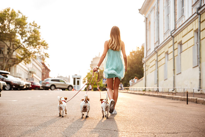 Helpful Tips For Walking With Your Small Dog In The City